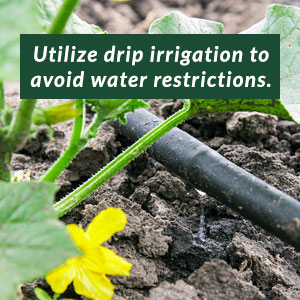 Utilize drip irrigation to avoid water restrictions