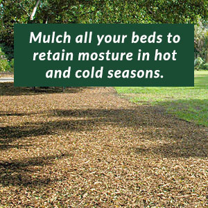 Mulch all your beds to retain moisture in hot and cold seasons