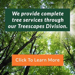 We provide complete tree services through our Treescapes Division